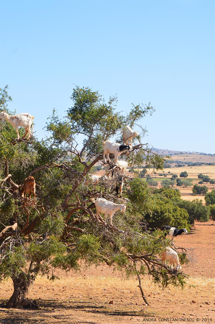 excursie-essaouira-maroc